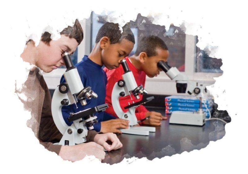 как правильно использовать микроскоп