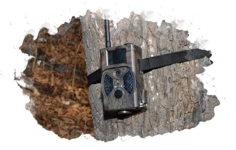 выбор фотоловушки для охоты и охраны выемкой сделать