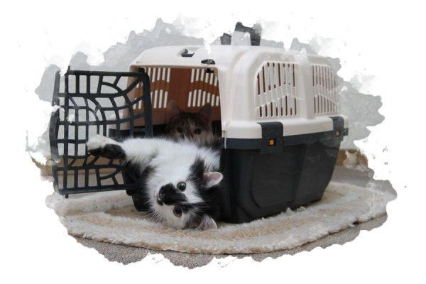 ТОП-7 лучших переносок для кошек и собак: какую купить, плюсы и минусы, отзывы