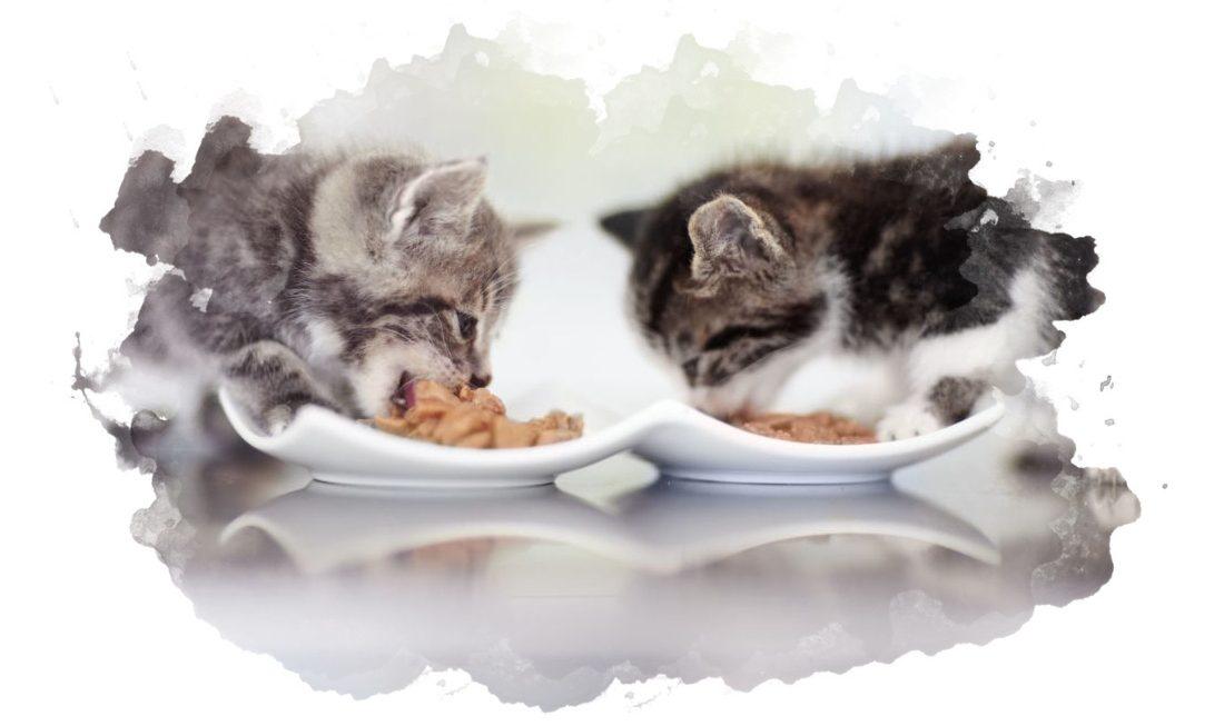 ТОП-7 лучших кормов для котят: рейтинг 2020, как выбрать, плюсы и минусы, отзывы