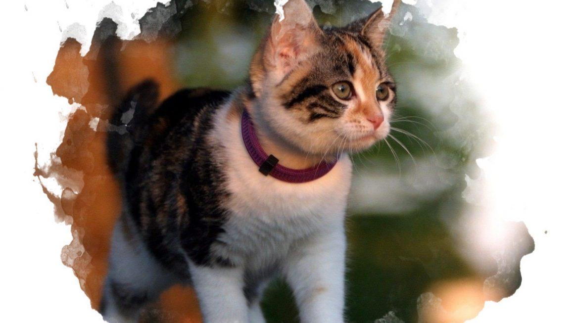 ТОП-7 лучших ошейников от блох для кошек и собак: какой купить, плюсы и минусы, отзывы