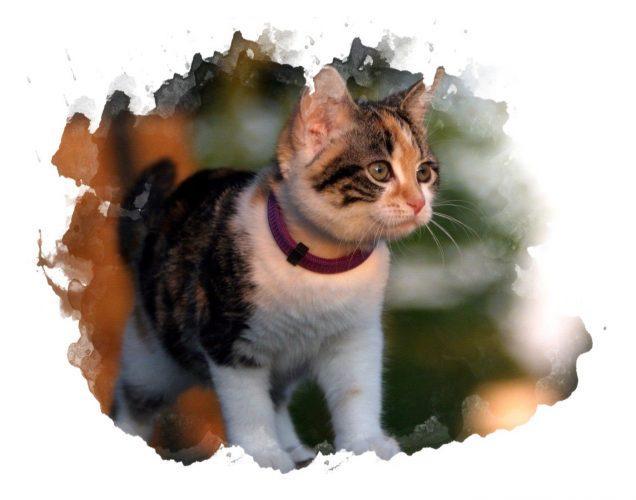 Ошейник от блох для кошек виды и эффективность