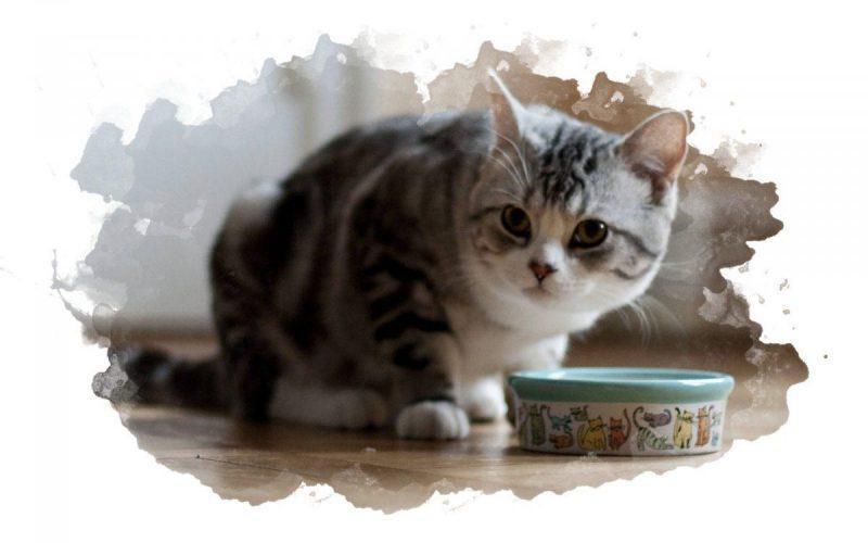 кот ест с миски