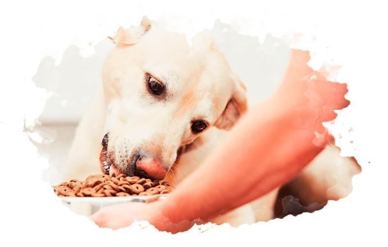 корм для домашних собак