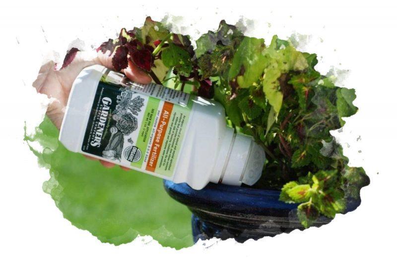 подкормка для растений