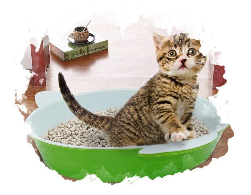 кот в кошачьем туалете