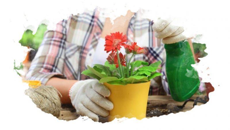 удобрение для цветущих