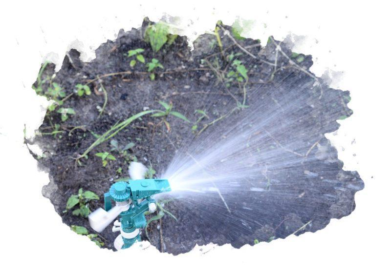дождеватель в огороде