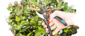 ножницы для сада